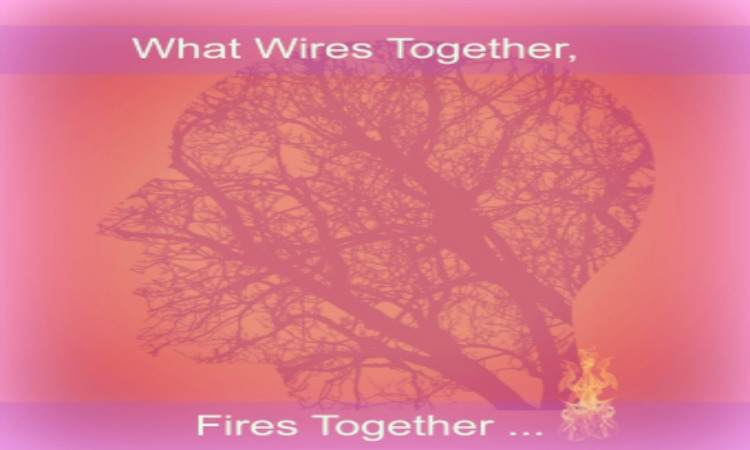 What Wires Together, Fires Together